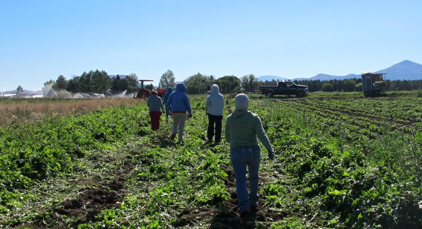 Sustainable Herbs Project interviews Randy Buresh of Oregon's Wild Harvest