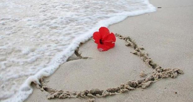 سمندر، زړه او سور ګل