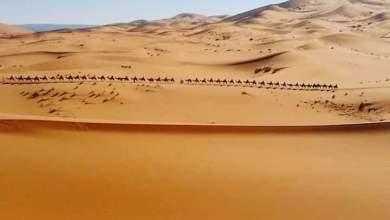 Photo of د عمر بن عبد العزیز خوندوره کیسه