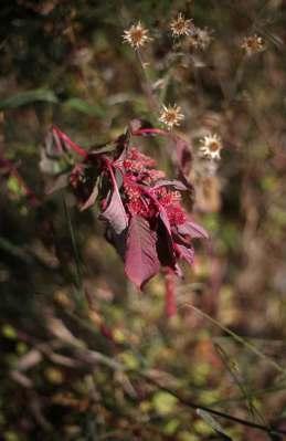 fleur image fleur