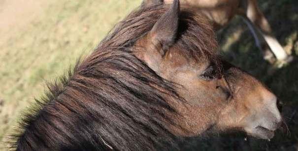 autre cheval dans le clip Pôle Emploi du rappeur français Nunsuko