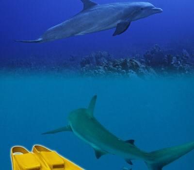 battuta di gambe squalo delfino nuoto swimmershop tecnica allenamento