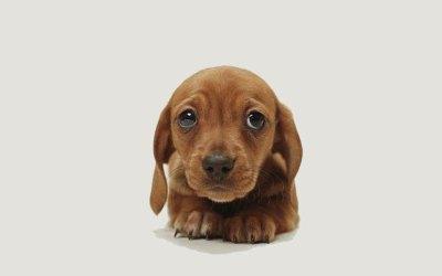 Puppies e Premi Hugo del 2015