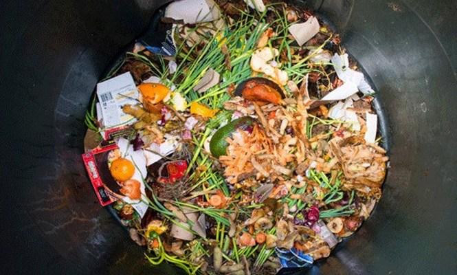 Cosa possiamo fare per non sprecare cibo (e non estinguerci)