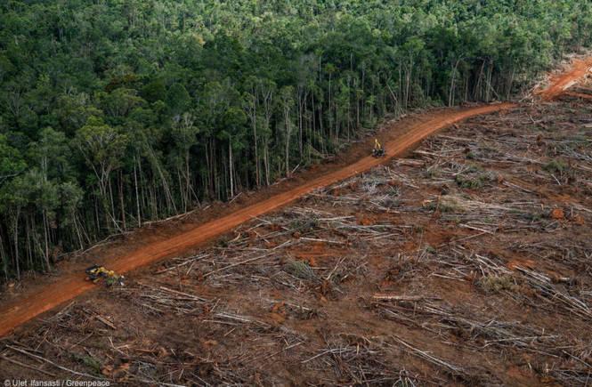 """Greenpeace: in dieci anni le multinazionali si sono """"mangiate"""" le foreste"""