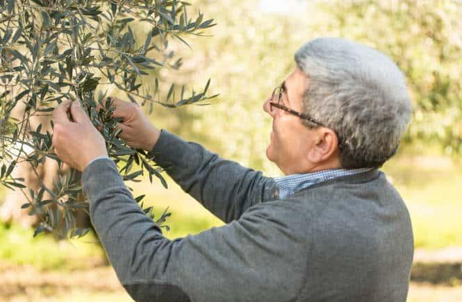 Biorfarm, l'adozione di alberi che fa incontrare contadini e consumatori