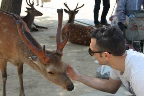 Diario Giappone Nara Cervi