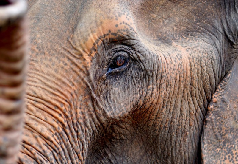 Offerte Thailandia Elefante