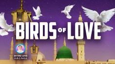 E-143 Birds of Love