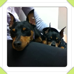 The two cutest therapy dogs on planet earth....if I do say so myself!