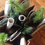 evergreen seedlings for weddings