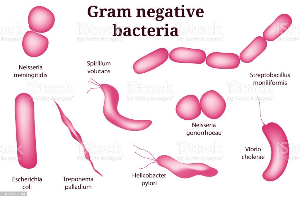 istockphoto on Gram negative bacteria
