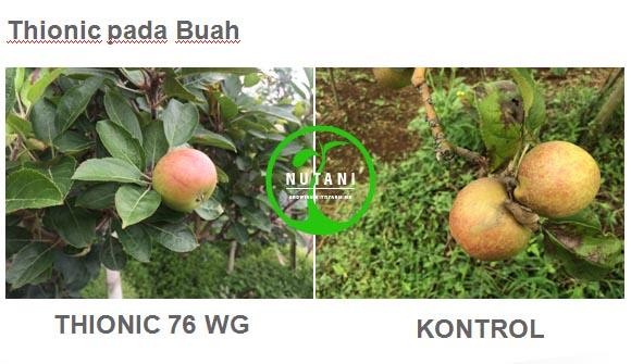 thionic76wg_buah
