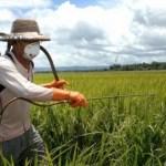 Jangan Pakai Bahan Aktif Fungisida ini Lebih Dari 4 Kali Per Musim