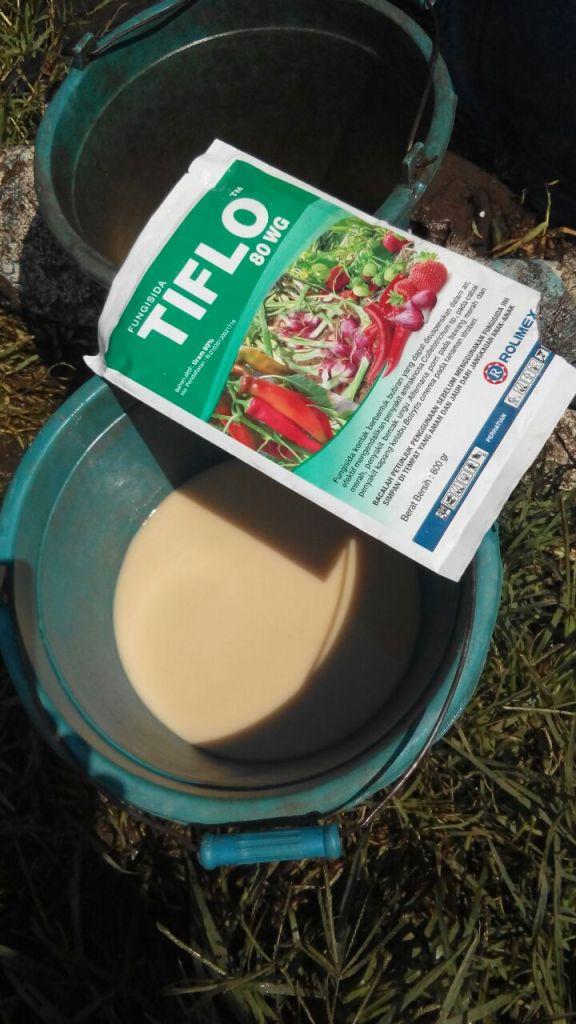 fungisida tiflo