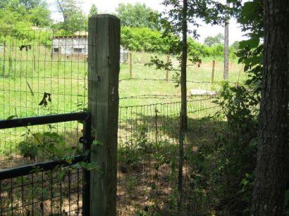 gate to chicken area