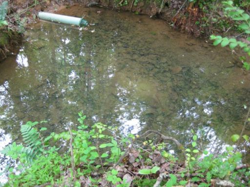the pond with outflow pipe and filter.  it's about 3 feet deep at its deepest