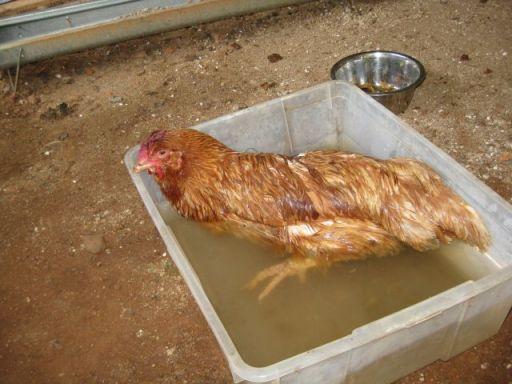 epsom salt bath - warm water and quarter cup epsom salts
