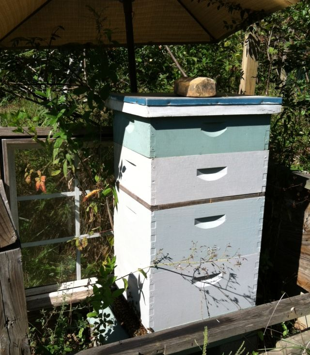a side view of the hive from the east (access) side