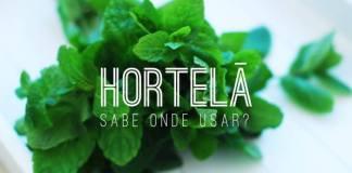 Hortelã - Alimento funcional - Nutrição Integrativa