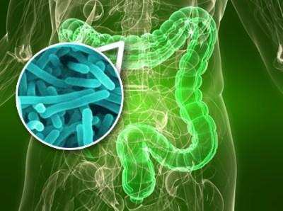 gut_bacteria