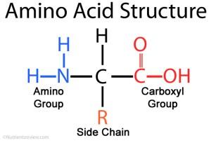 622 (a) Reactions of Amino Acids  Ellesmere OCR A level