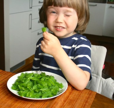 Child Eating Spruce Tips