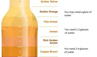 Urine Color Test for Hydration