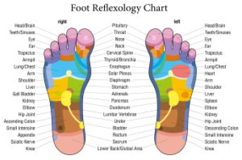 reflexology chart - feet