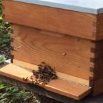 bijenkast2