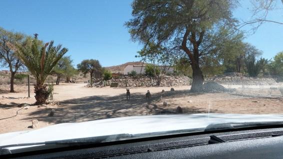 Camp Gecko Namibia