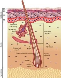 Laser vs Electrolysis