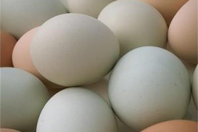 Arkansas Eggs Safe To Eat_-5650357502006968212