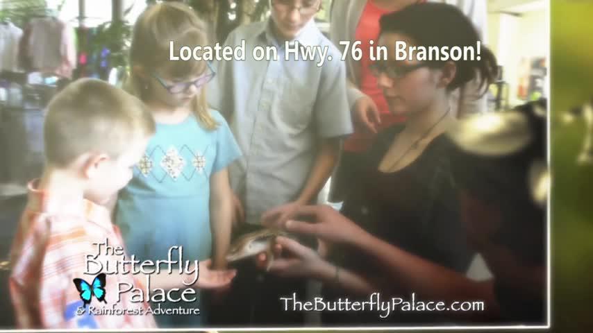 Butterfly Palace 3_46496482-159532