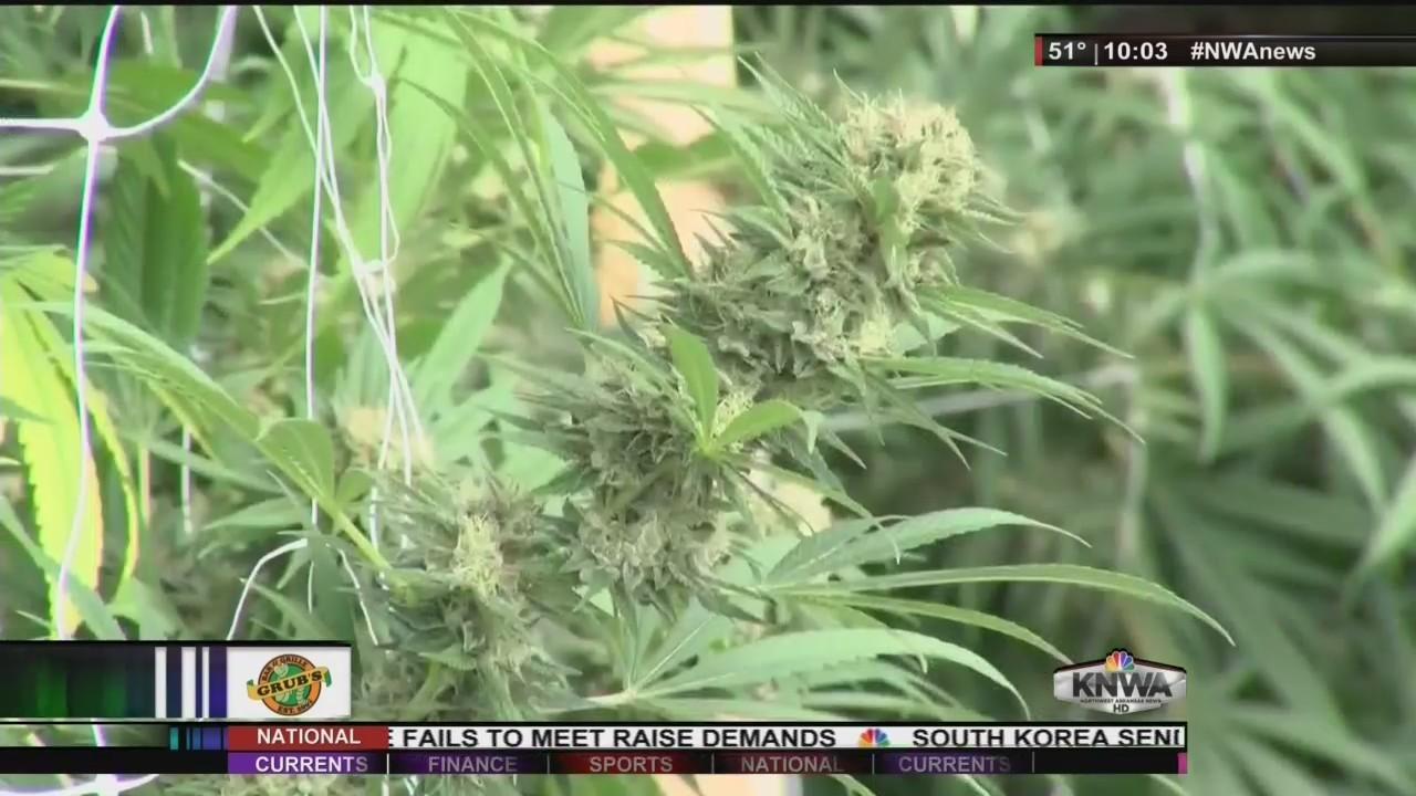 Medical_Marijuana_Update_3_4_2018_0_20180305051134