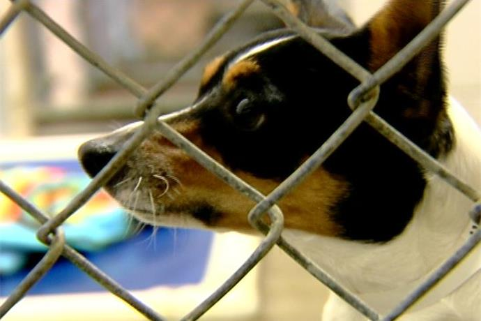Fayetteville Animal Services Holds Adoption Day at Mountain Ranch_-8127533649948750031