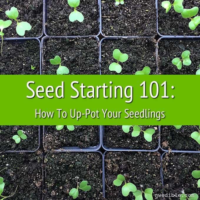 Seeds 101-3