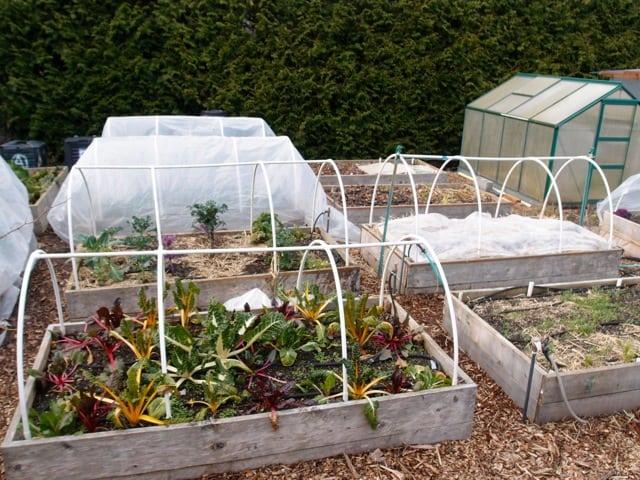 Half the garden is under tunnel cloche