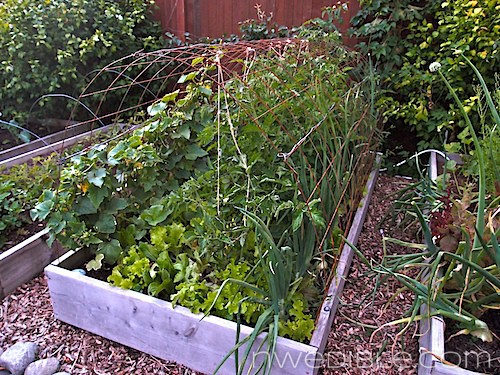 Front Bed: August