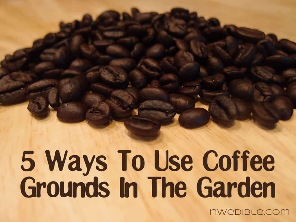 Ways to use coffee grounds in the garden 2 tazzine - How to use coffee grounds in garden ...