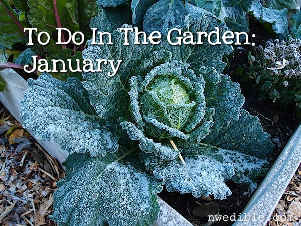 To Do In The Garden: January