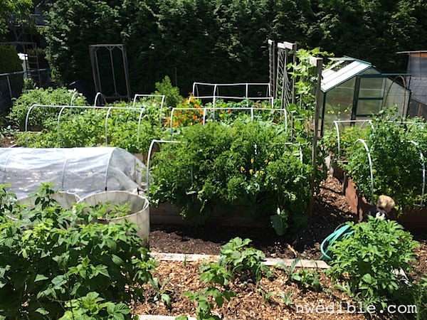 {Reader Question} Help! Garden Anxiety!