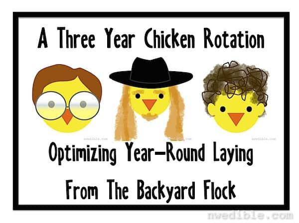 Chicken-Rotation
