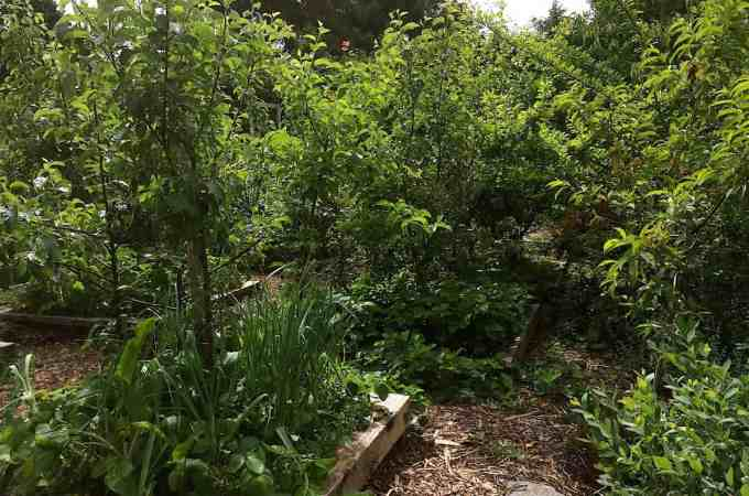 The Backyard Orchard is looking really great this year.