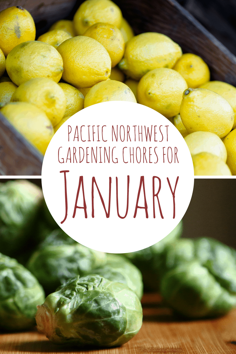 january gardening chores for the pacific northwest northwest