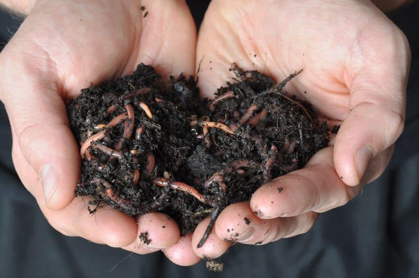 Buried composting and vermicomposting systems can be very stealthy.