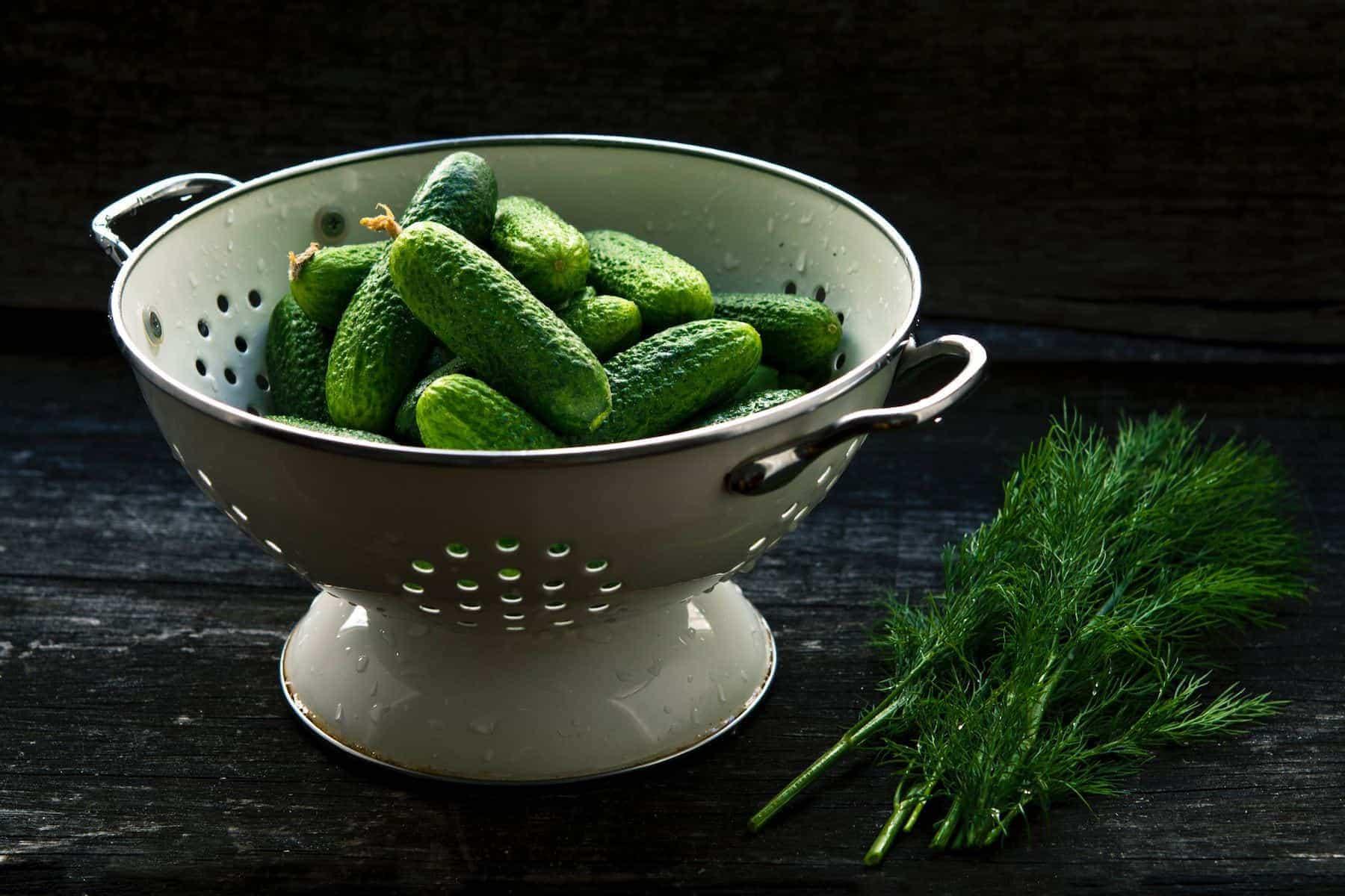jonathan-pielmayer-pickling-cucumber