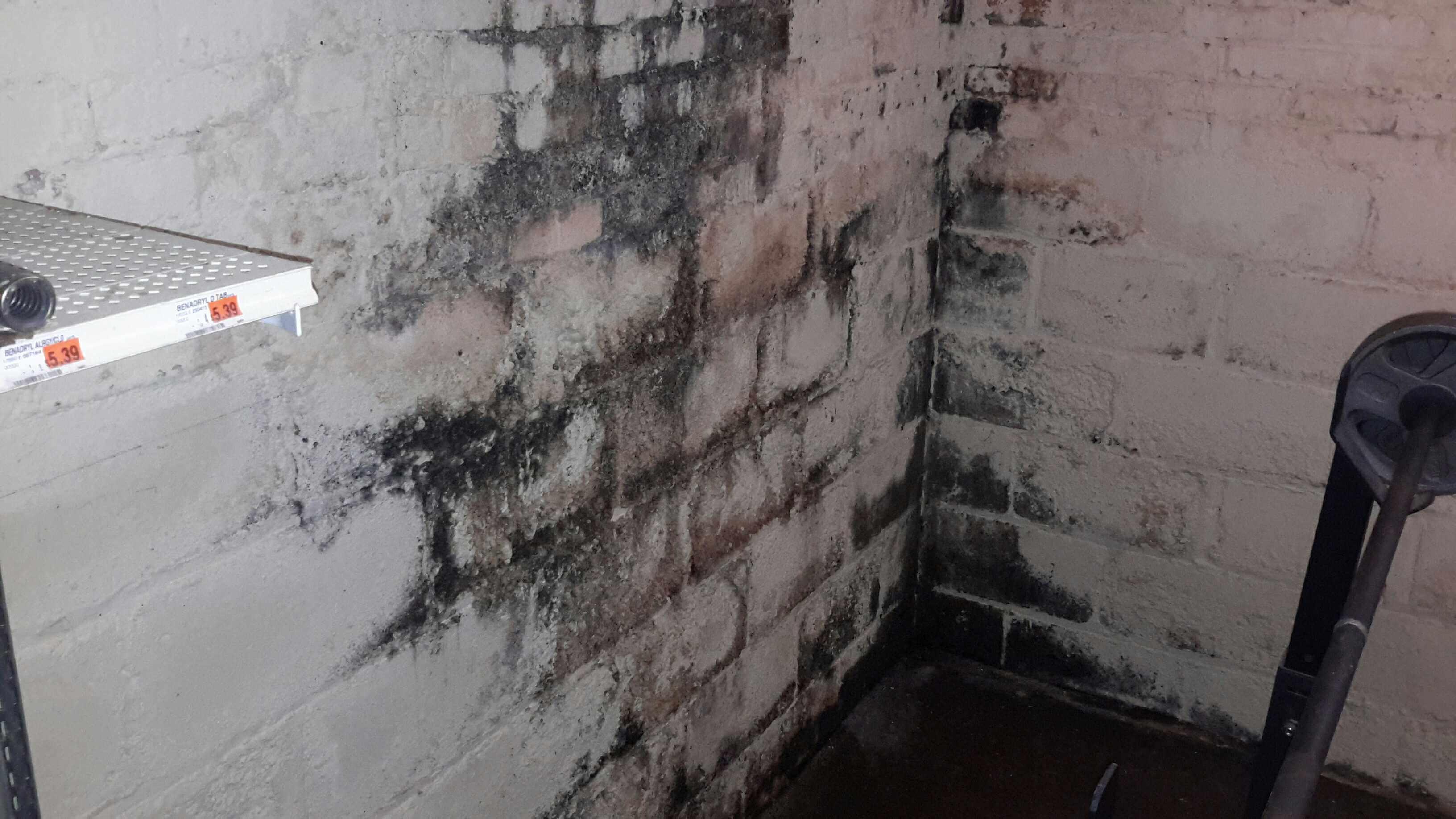 Mold Inspection in Northwest Indiana, Michiana & Southwestern Michigan