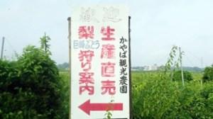 かやば観光農園|茨城県の栗拾いが出来るおすすめのスポット