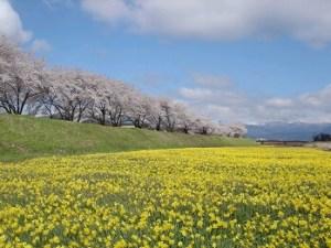 長野県高島公園